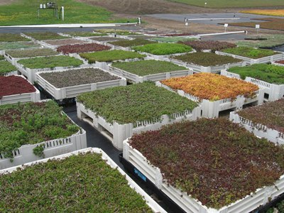Sedum Master, our green roof supplier